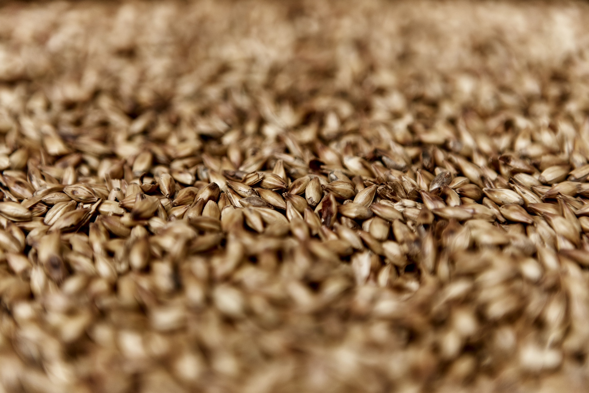 Shepherd Neame Traditional Ingredients - Barley